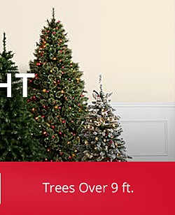 Shop Trees By Height
