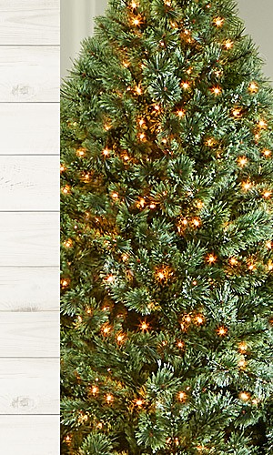 Christmas Trees up to 30% off