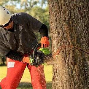 Chain Saw Safety Tips