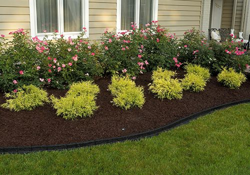 A thick layer of mulch around outdoor plants