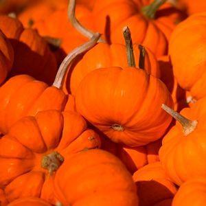Halloween blog posts