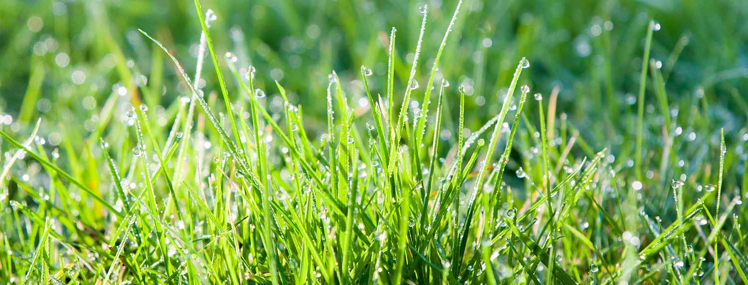 Lawn with droplets of water on it