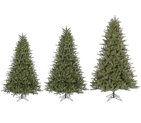 Christmas trees from shortest to tallest