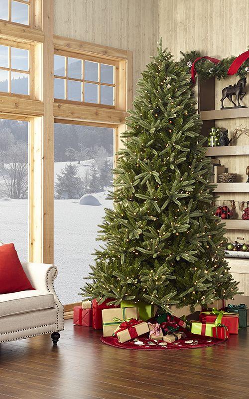 Tree by the window in winter