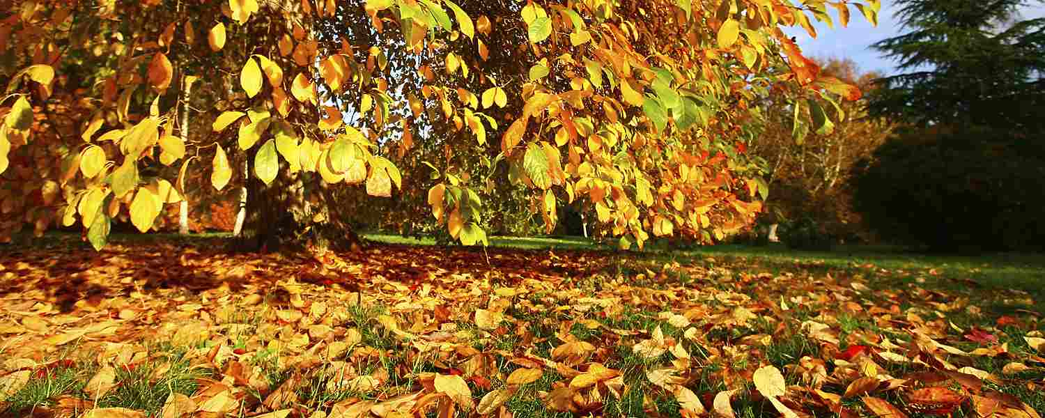 Keep the Leaves: Why You Should Mulch Instead of Rake - Sears