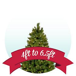 Trees 4.5 ft - 6 ft
