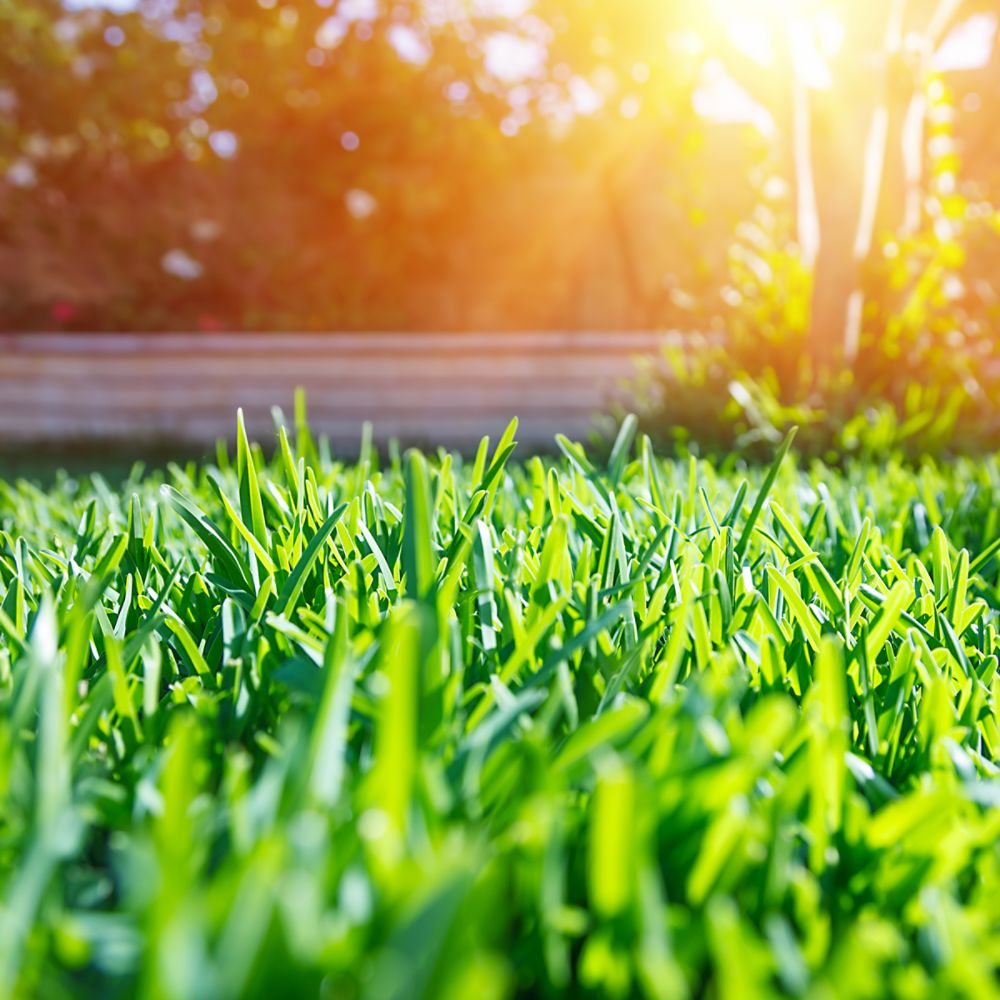 5 Ways to Help Your Lawn Beat the Heat