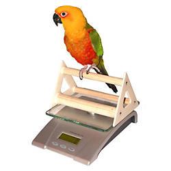 Bird&#x20&#x3b;Toys