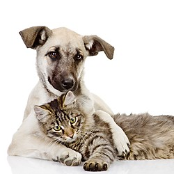 Pet Knowledge Center