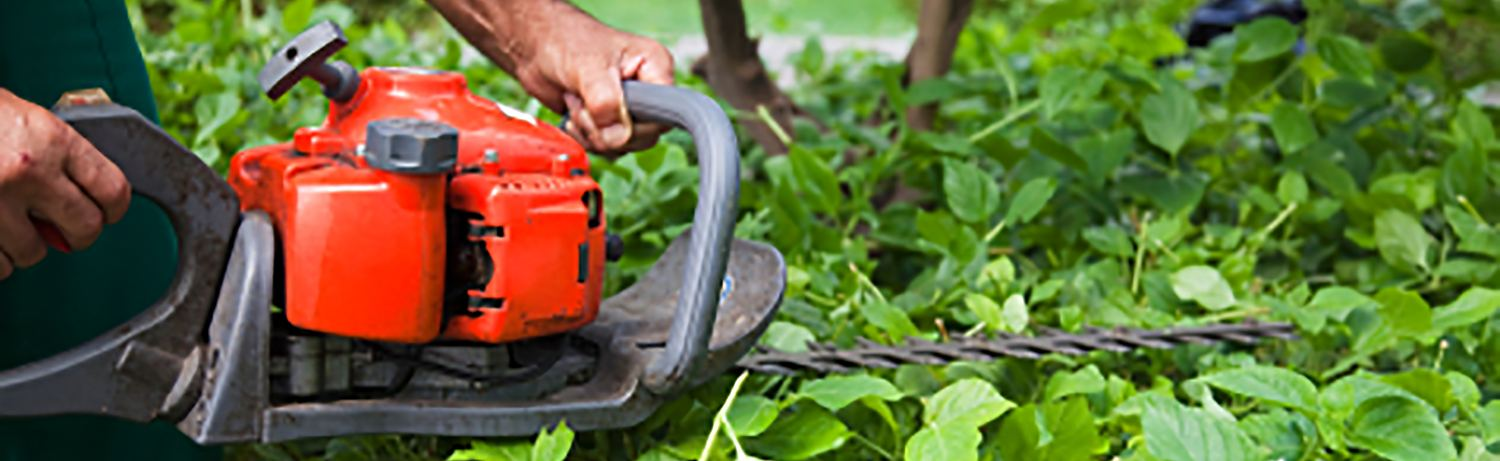 buying a hedge trimmer