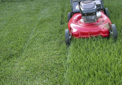 Recycle your grass clippings