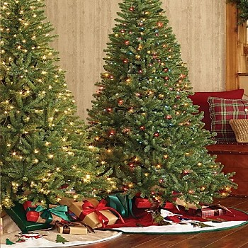 christmas shop trees - Christmas Tree Shop Careers