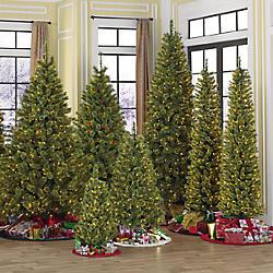 Christmas&#x20&#x3b;Trees