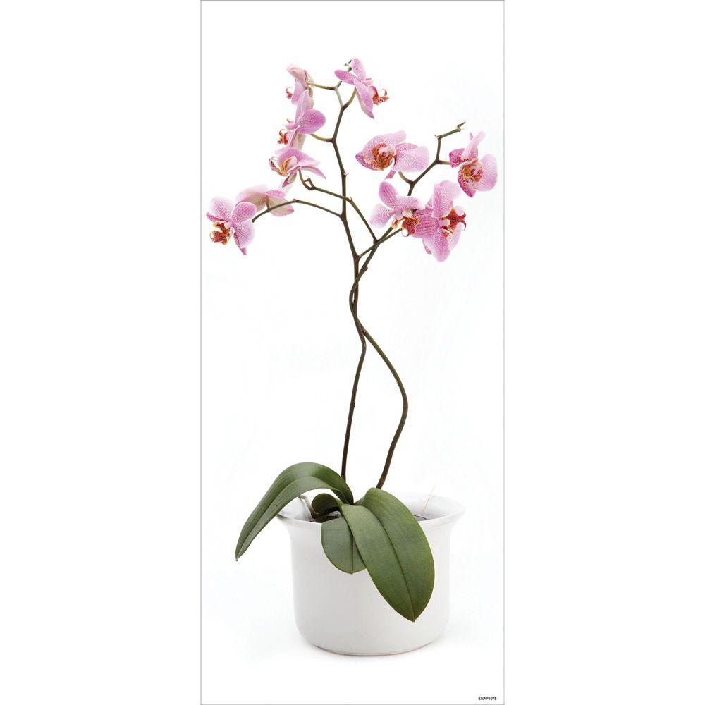 Blue Mountain Orchid 1 Sheet 17.125' X 39.75' $ 19.99